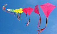 makar-sankrati-many-kites-photo