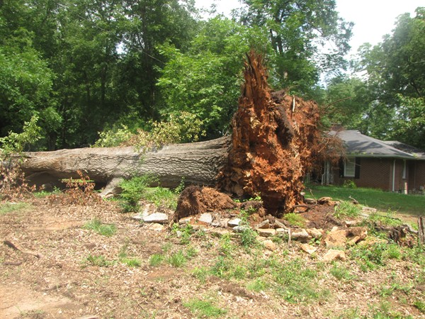 A fallen tree lays in the front yard of a home on Rockbridge Road in Clarkston. Photo by Carla Parker