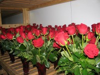 Red roses, though more expensive on Valentine's Day, are still popular.