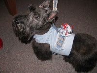 Sadie models a Migrubbie dog jacket complete with a tabby. Photos by Kathy Mitchell