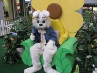 The Northlake Mall Easter Bunny becomes Caring Bunny for a few hours as he hosts visits with children with special needs.