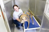 PAWS Atlanta shelter manager Laura McKelvey helps a dog onto  a kuranda bed. Photos by Andrew Cauthen