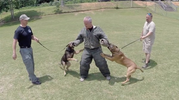 Shallow Creek Kennels will partner with Doraville Police Department in providing and training two K9 officers as well as two handlers. Photos courtesy of Shallow Creek Kennels.