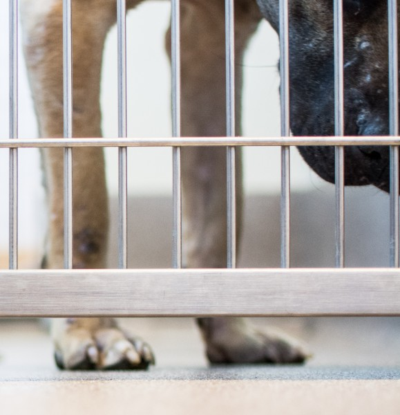 DeKalb County investigators arrested two people in Ellenwood in connection with dogfighting. According to officers approximately 17 dogs were seized from the house and transported to DeKalb's animal shelter.